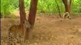 Monkey Death Wish