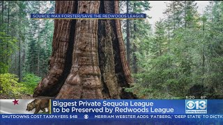 California Group Wants To Buy World's Largest Remaining Private Giant Sequoia Forest For $15M
