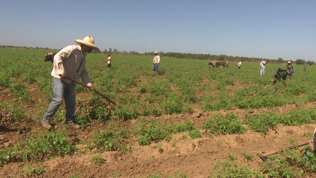Campesinos granmenses festejan su día con el compromiso de producir más alimentos para el pueblo