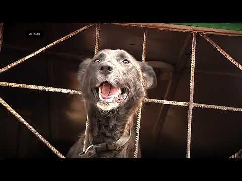 В России вступил в силу закон о жестоком обращении с животными. Что изменилось