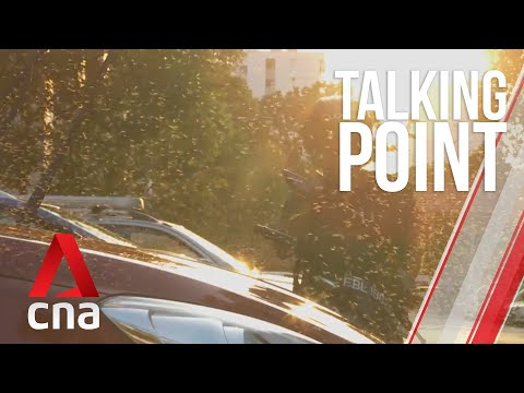 CNA   Talking Point   E29: As Singapore gets hotter, what other pests will the heat bring?