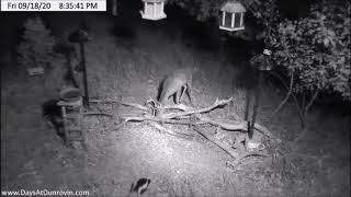 Dunrovin Ranch Video_2020-09-18_205838-Deer and Skunk at Bench