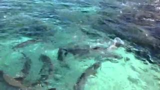preview picture of video 'Tarpon at George Town Grand Cayman'