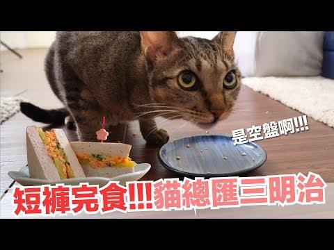 肉肉滿滿貓總匯三明治