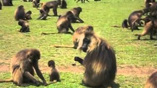 Simien National Park, In Gondar, Ethiopia |1