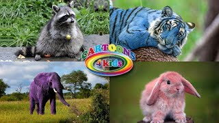 Изучаем цвета и животных для детей. Развивающее видео про животных