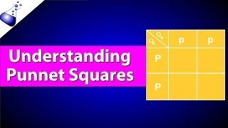 How Punnett Squares Work