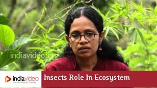 Insects role in ecosystem
