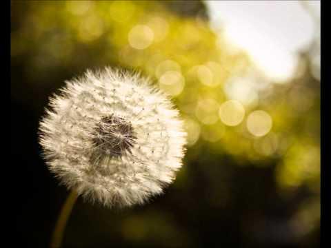 Audioslave - Dandelion