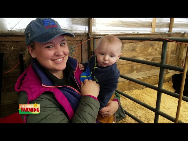 Virginia Farming: Trends in beef cattle