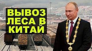 Китайцы уничтожают Сибирь