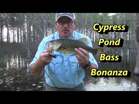 Cypress Pond Bass Fishing Bonanza!