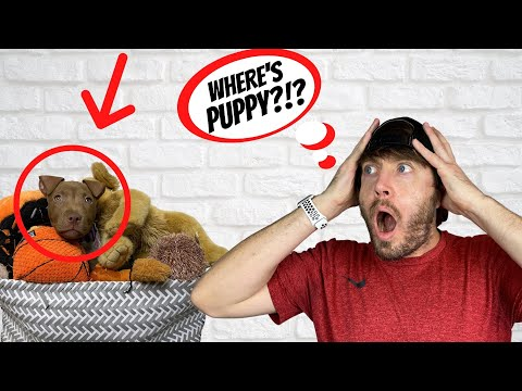 Download WE LOST OUR PUPPY HD Mp4 3GP Video and MP3