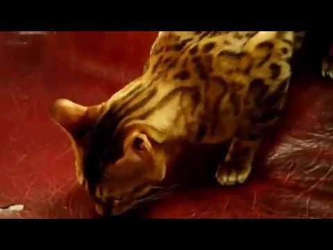 Прикольные коты с Международной выставки кошек