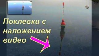 Поклевки с 2-х камер. Наложение видео. Ловля на поплавочную удочку. Рыбалка. Fishing