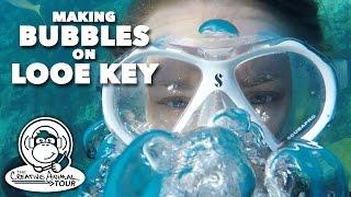 Making Bubbles on Looe Key