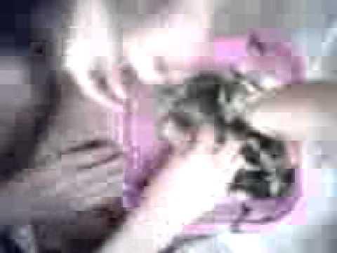 Download Video Oyes'ahhhhh,.,pedas Bgt.3gp HD Mp4 3GP Video and MP3