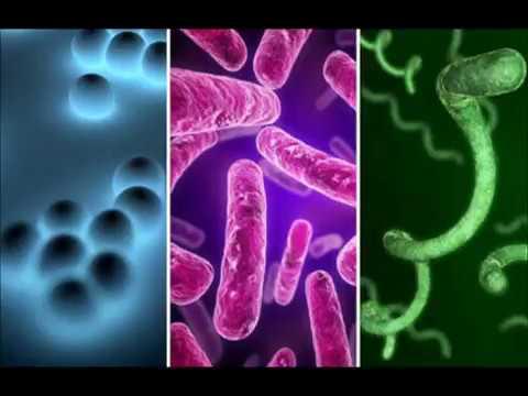Die Antibiotika für Prostata verwenden