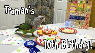 Truman Cape Parrot - Happy 10th Birthday!!!