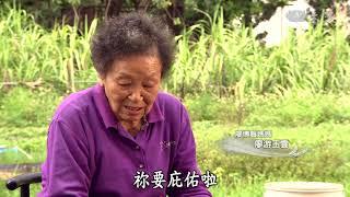 【農夫與他的田】20190222 - 苦茶籽的三代情
