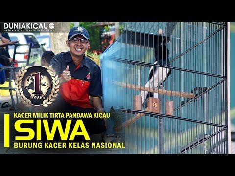 JAWARA - SIWA Membuktikan Kualitas Jawara Disemua Event Dan Juri