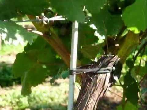 2013 10 22 Vinotto für den Weinbau
