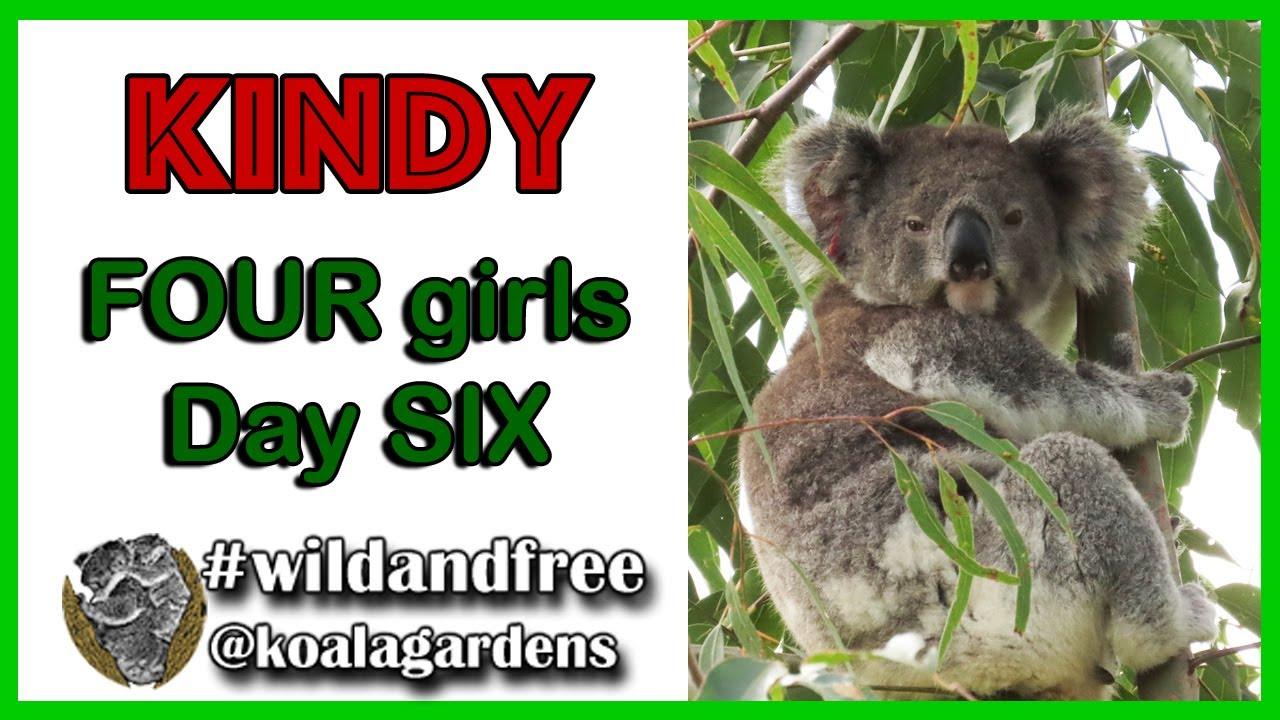 Kindy – FOUR girls, day SIX