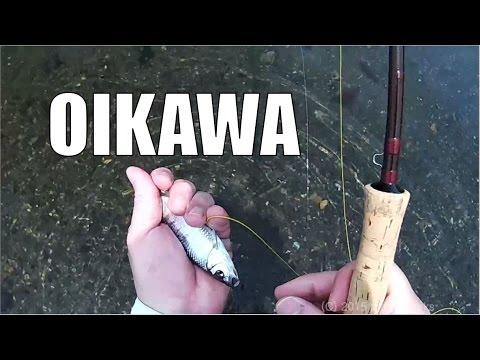 "[HD] Pale Chub Fly Fishing.""Flyfisher's eyes. No.35"""