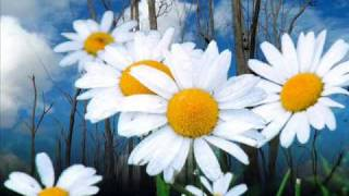 Как цветок полевой