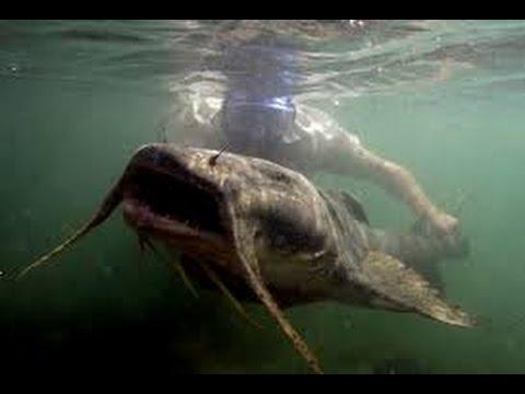 Fish monster in Ebro river Spanish - Hun