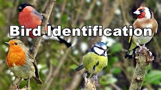 Identify Birds - Garden Bird Identification