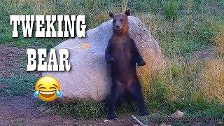 BEST BEAR DANCE EVER | TWERKING BEAR 🐻😂