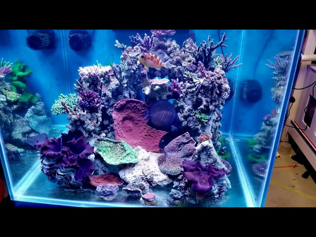 93 cube Reef aquarium all stocked up! Part of 350 Gallon Reef!