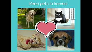 Maddie's Pet Assistant App Is Revolutionizing Support for Pet Foster and Adoptive Homes - webcast