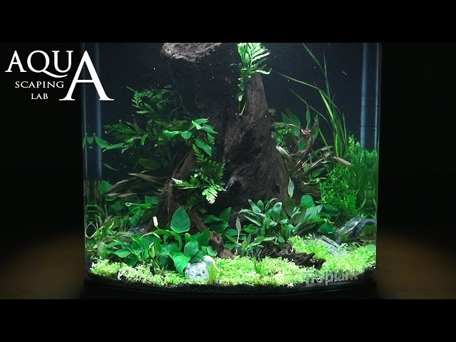 "Aquascaping Lab - Tutorial Natural Undergrowth Wood tank 130L ""Enchanted Forest"" Sera Biotop 130 XXL"