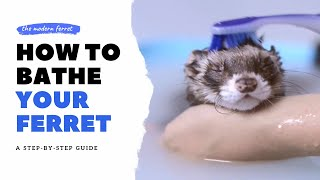 BEST METHOD - How to Correctly BATHE Your Ferret | Ferret Care