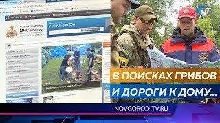 За минувшие выходные в новгородских лесах заблудились трое грибников