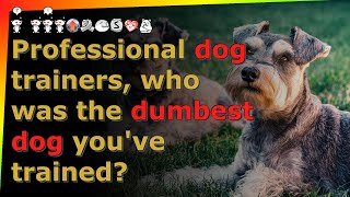Professional dog trainers, who was the dumbest dog you've trained? reddit AskReddit stories