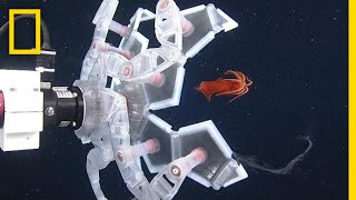 See a New Robot That Captures Sea Creatures—Gently | National Geographic