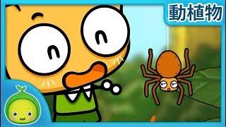 子供の理科「動植物」 クモの巣の作り方 【まめきゅん】  子供向け動物 動物の名前 子供向け知育動画  植物を育  子供向け科学