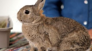 How to Know When to Euthanize a Rabbit   Pet Rabbits