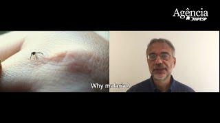 Diário de Campo | 4th episode - Malaria