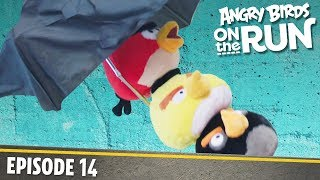 Angry Birds On The Run | Crying Sky   S1 Ep14