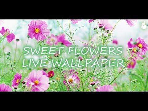 Video of Sweet Flowers Live Wallpaper