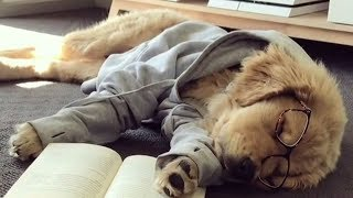 Милые собаки, да собаки смешные, да кошки проказницы Калейдоскоп за 19 09 2018