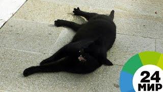 В США кот-трюкач прокатился на крыше машины - МИР 24