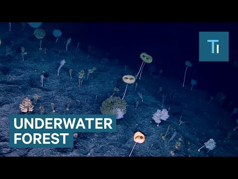 Exploring an Underwater Other Worldly Forest