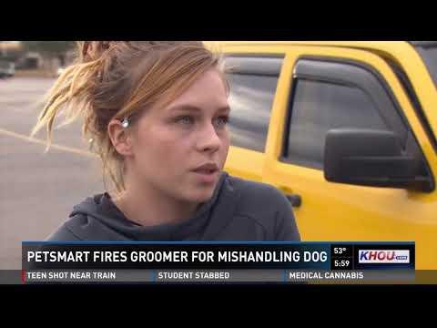 Caught on camera: Dog mishandled by PetSmart groomer
