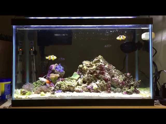 Awesome Fully Stocked 10 Gallon Nano Reef Tank