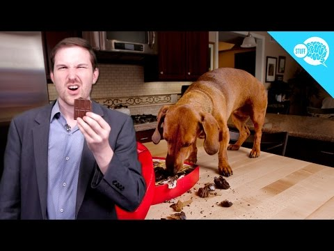 Is Chocolate Poisonous to Dogs?